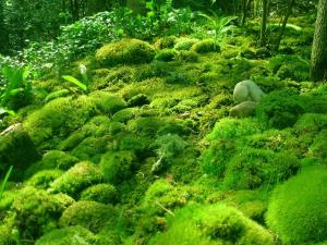 moss-mountain