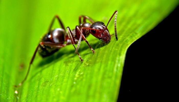 Ant-1-700x400
