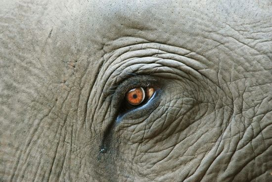 elephant-tears.jpg.1000x0_q80_crop-smart